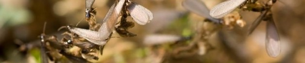 TermiteAwarenessC